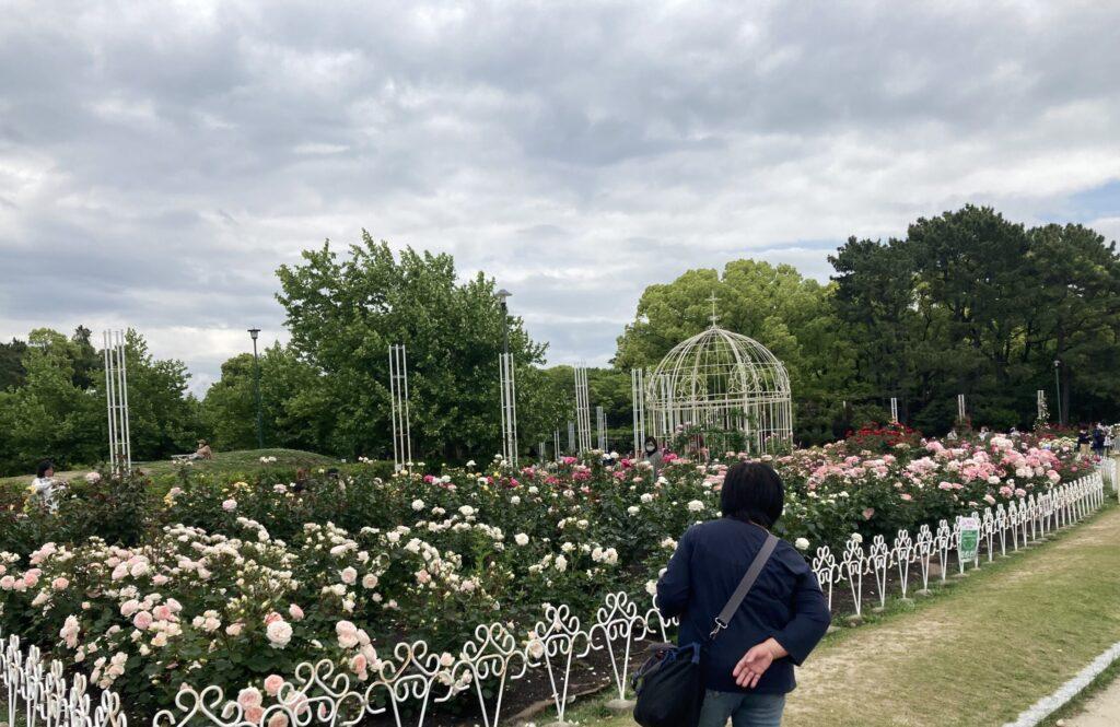 2021.5鶴舞公園のバラ1