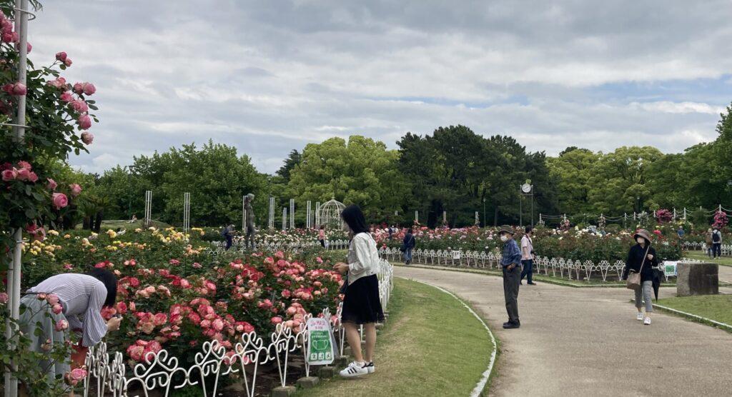 2021.5鶴舞公園のバラ2